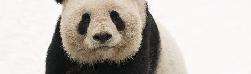 / ©: naturepl.com / Edwin Giesbers / WWF