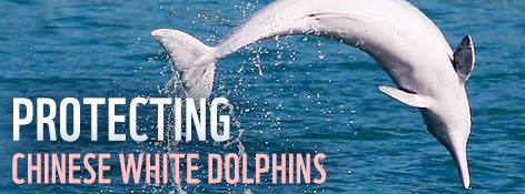 Protecting Chinese white dolphins / ©: WWF-Hong Kong