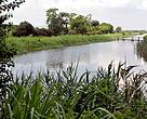 Mai Po Wetland