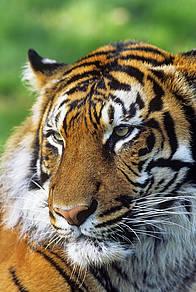 / ©: David Lawson / WWF-UK
