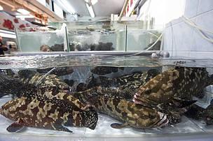 Hong Kong government improves seafood trade monitoring