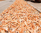 Shark fins laid out on the streets to dry and for trimming/cleaning before selling.