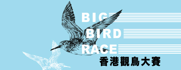 Big Bird Race
