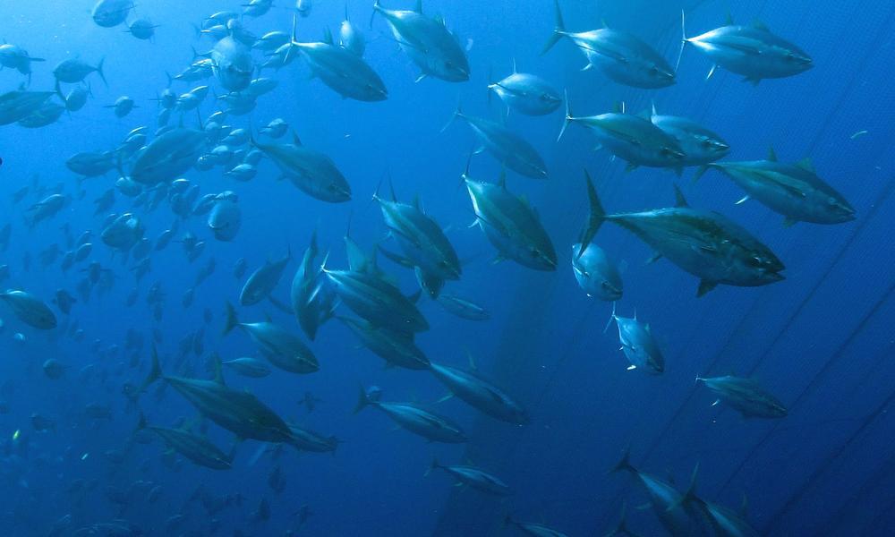 海洋动物制作废旧材料