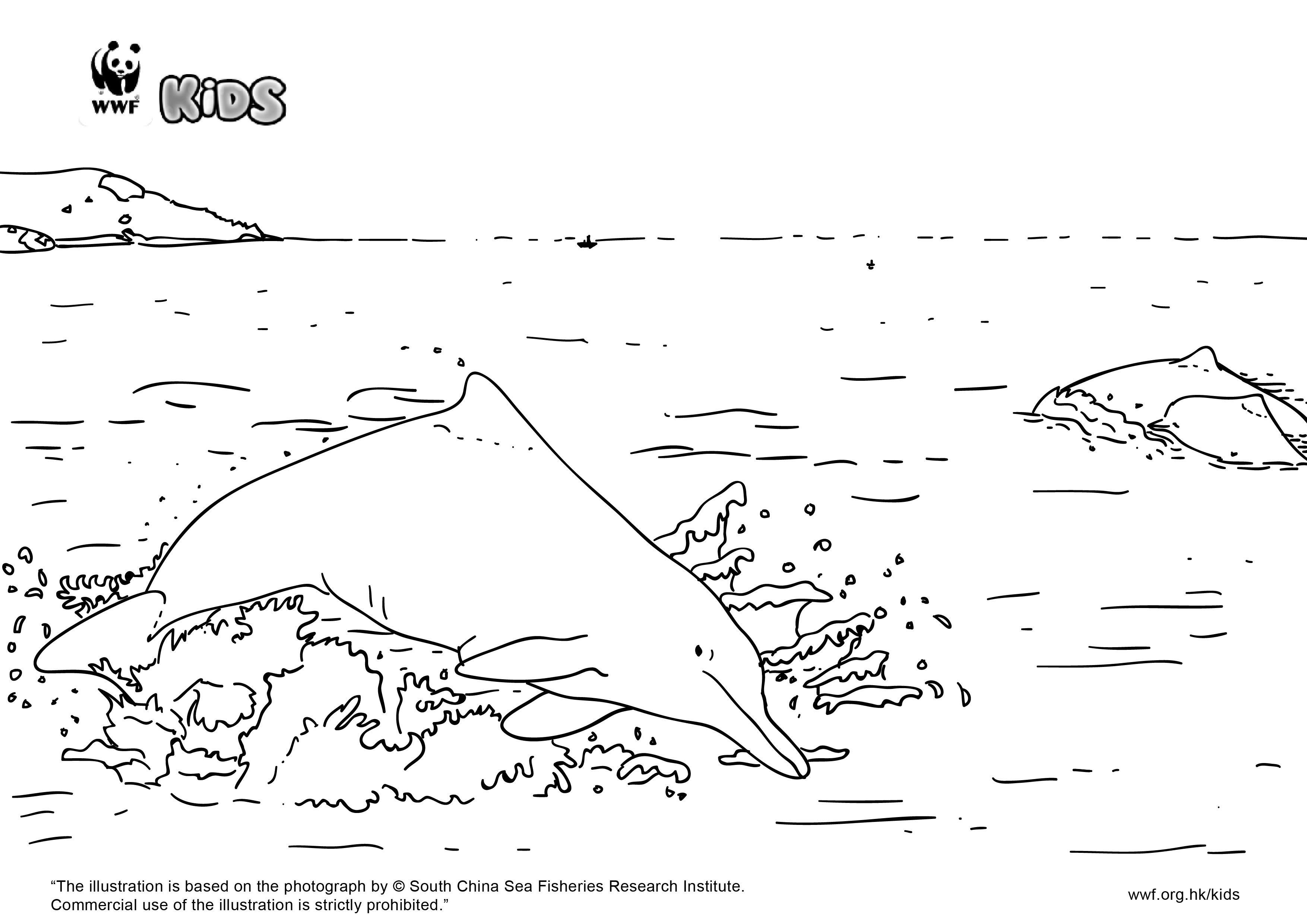 """WWF Hong Kong - """"I Love Chinese white dolphins"""" colouring ..."""