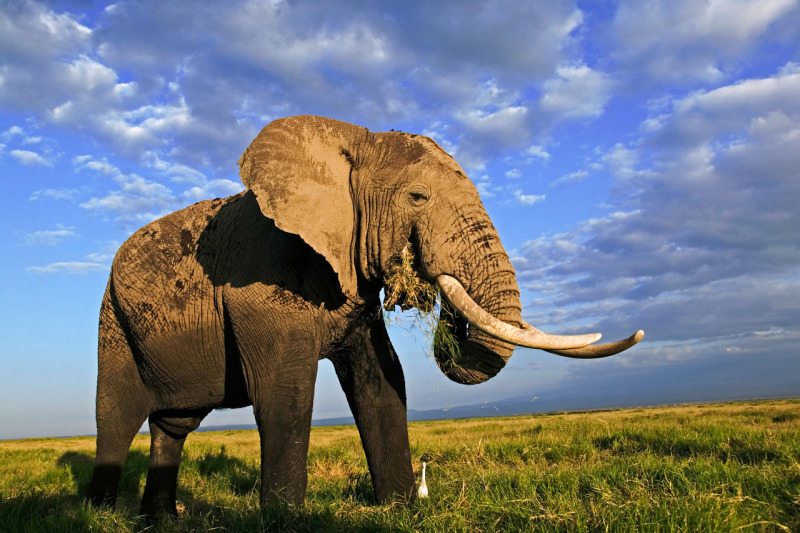 「濒危野生动植物种国际贸易公约」(cites)是甚麼?