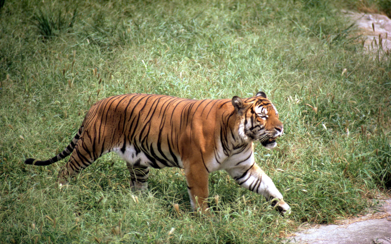 出售国家重点保护野生动物