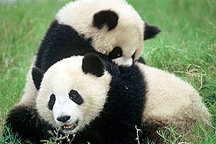 / ©: Michel Gunther / WWF
