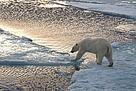 / ©: Steve Morello / WWF