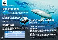 《鯊魚》資料單張 / ©: WWF-Hong Kong