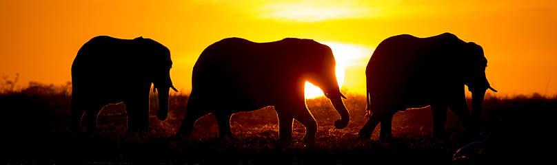 / ©: Will Burrard-Lucas / WWF-US